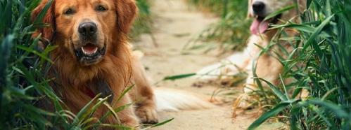 Sinn und Zweck von Haftpflichtversicherungen für Hunde